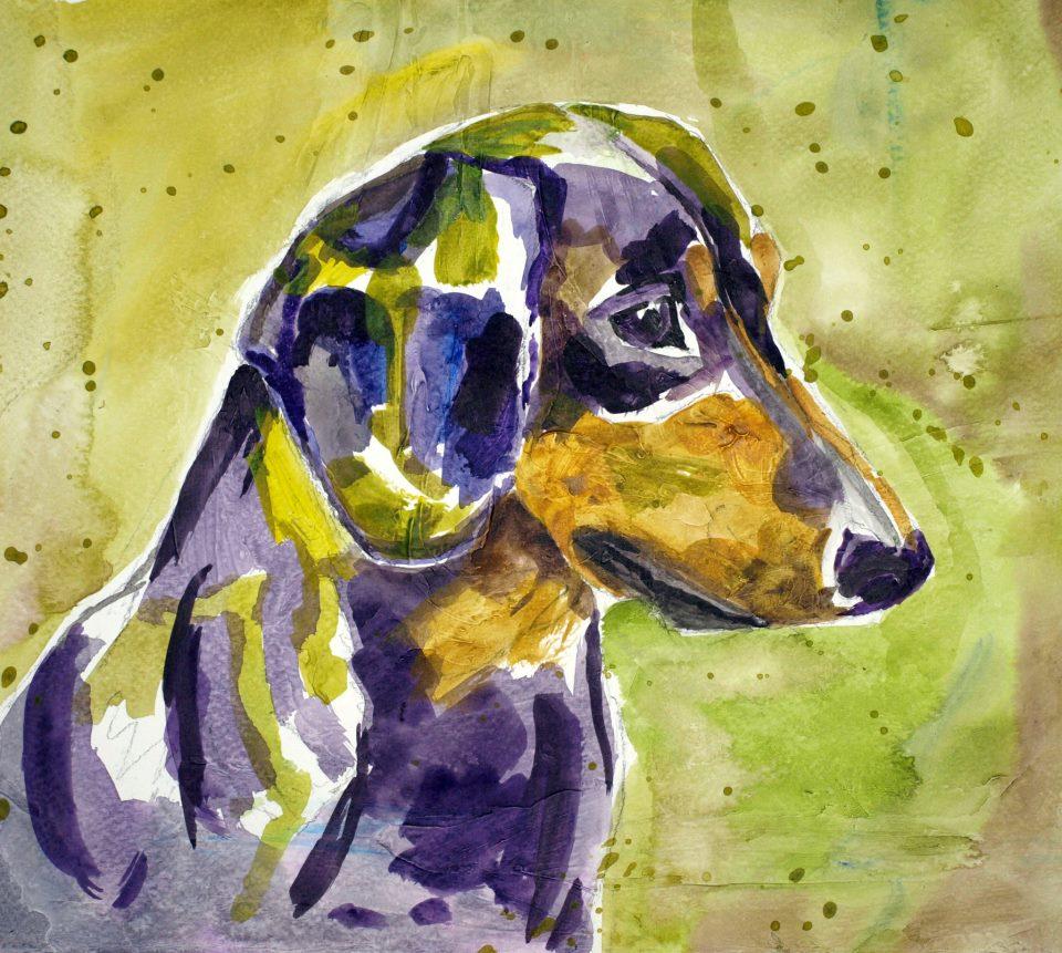 Sausage dog portrait